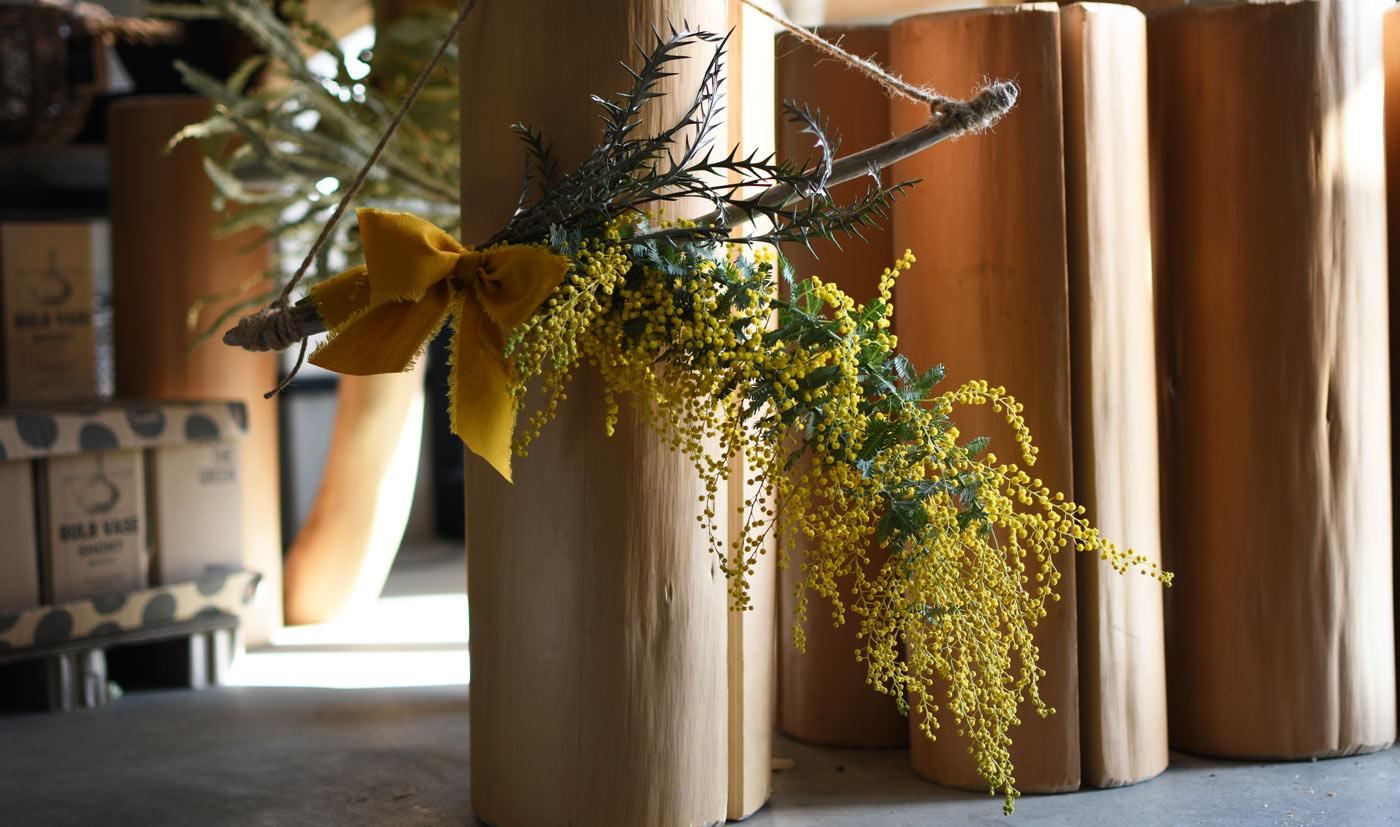Mimosa Swag × 流木